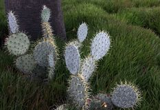 Cactus on a sunny hill. Under the palm tree. With selective focus Stock Photo