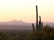 Cactus Sunset. Mountains and cactus in the desert as the sun is setting Royalty Free Stock Photography
