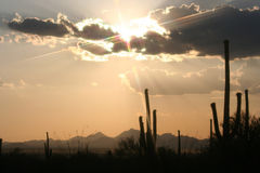 Cactus Sunset. Sunset in the desert of Arizona with cactus Stock Images