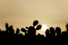 Cactus Sunset Canary Islands Stock Images