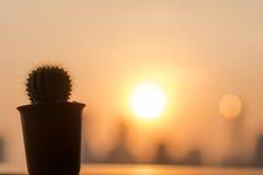 Cactus Sunset. Close up a cactus under sunset Stock Image