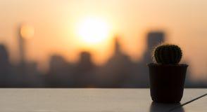 Cactus Sunset. Close up a cactus under sunset Stock Images