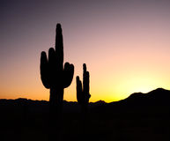 Cactus Sunset Silhouette. Cactus in silhouette with the sun setting over the mountains in the background royalty free stock image