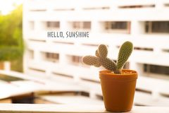 Cactus in sunshine. Cactus is standing in sunshine Royalty Free Stock Photos