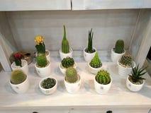 Cactus sur l'affichage Photo libre de droits