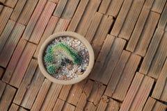 Cactus sur la brique Photographie stock libre de droits
