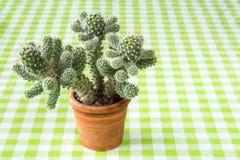 Cactus sur la nappe à carreaux images stock
