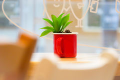 cactus sur la table Photographie stock
