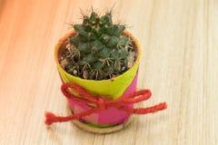 Cactus sur le bois Photos stock