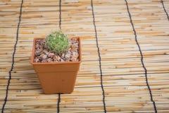 Cactus sur le fond en bois Image libre de droits