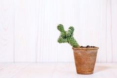 Cactus sur le fond en bois blanc image libre de droits