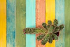 Cactus sur le fond en bois coloré images libres de droits