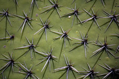 Cactus surface with spikes. Mexico Royalty Free Stock Images