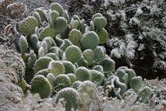 Cactus surgelé 2 Photo libre de droits