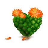 Cactus sveglio del cuore su priorità bassa bianca Fotografia Stock