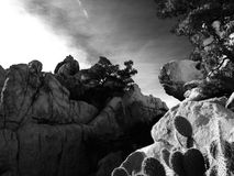 Cactus. Taking a break from bouldering to enjoy the beautiful view Stock Images