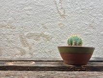 Cactus in terraglie Immagini Stock Libere da Diritti