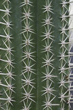 Cactus thorn Stock Images