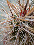 Cactus Thorns. The natural self defense mechanism of the sharp cactus thorns can be used to depict many conceptual ideas. For examples : warning, keep off royalty free stock photography