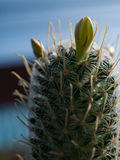Cactus and thorns Stock Photography