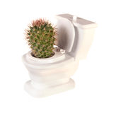 Cactus toilet Royalty Free Stock Photography