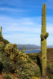 Cactus on Tonto National Monument Stock Photos