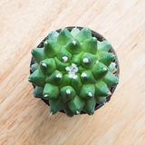 Cactus top view: mammillaria Stock Photo