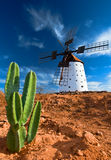 Cactus and traditional windmill Royalty Free Stock Photo