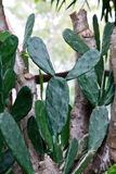 Cactus tree at summer Royalty Free Stock Photo