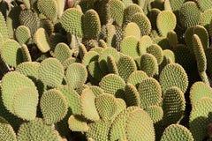Cactus tree at summer Stock Photo