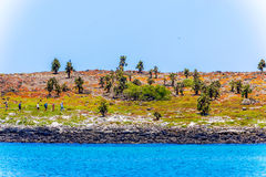Cactus Trees In Galapagos Islands Stock Images