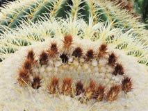 Cactus tropical Imagen de archivo libre de regalías