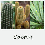 Cactus in tropical garden Royalty Free Stock Images