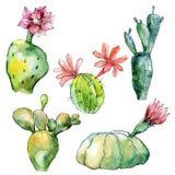 Cactus tropicale verde Fiore botanico floreale Wildflower selvatico della foglia della molla isolato Immagini Stock