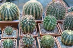 Cactus tropicales en el jardín botánico de la ciudad fotografía de archivo