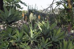 Cactus trovato in Sountern California immagine stock libera da diritti