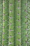 Cactus trunk Stock Images