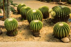 Cactus in tuin Royalty-vrije Stock Afbeeldingen