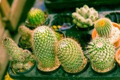 Cactus in tuin Royalty-vrije Stock Afbeelding