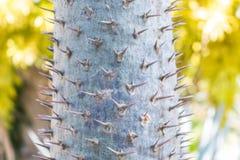 Cactus in un giardino del cactus Fotografia Stock Libera da Diritti
