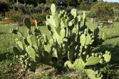 Cactus in un giardino floreale Fotografie Stock Libere da Diritti
