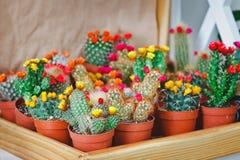 Cactus in un negozio di fiore Immagine Stock Libera da Diritti