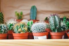 Cactus in un negozio di fiore Fotografia Stock Libera da Diritti