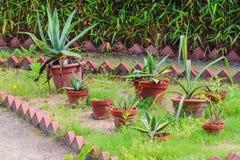 Cactus, in un parco pubblico Fotografie Stock