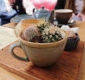 Cactus in un tazza da the fotografie stock