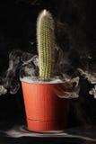 Cactus in un vaso di fiore su un fondo nero Fotografia Stock