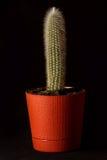 Cactus in un vaso di fiore su un fondo nero Fotografia Stock Libera da Diritti