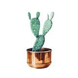 Cactus in un vaso Illustrazione tropicale del giardino Immagini Stock Libere da Diritti
