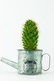 Cactus in una latta nel fondo bianco Immagine Stock Libera da Diritti
