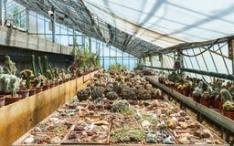 Cactus in una serra nel giardino delle piante esotiche Pallanca in Bordighera, Italia. Fotografie Stock Libere da Diritti